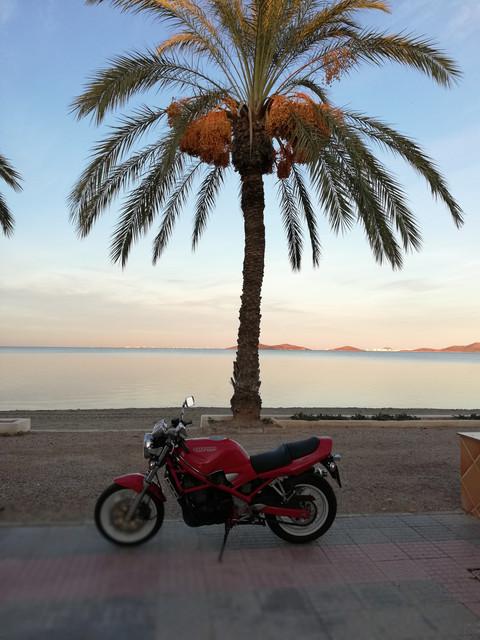 Bandit roja en Los Alcázares, la zona del Mar Menor - Página 2 IMG-20181107-174907