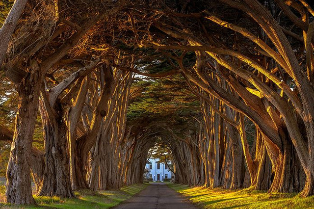 Cypress Tree Tunnel At The Historic Marconi Wireless Station California 2