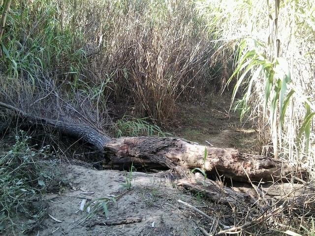 verificacion parte de la Loja 500 trail 18 Foto5427