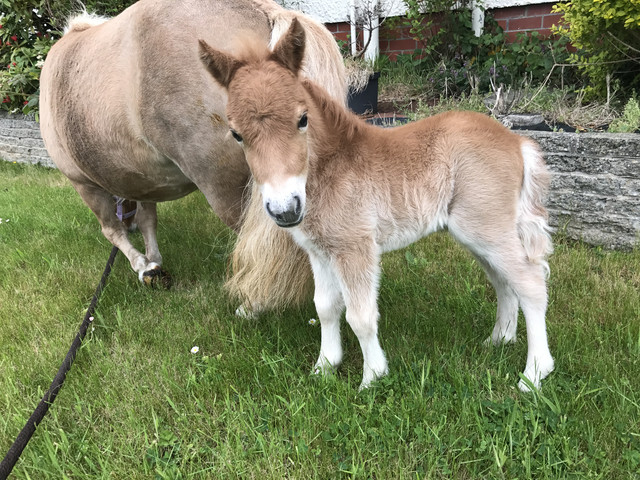Official Foal Thread - Page 2 IMG_2314