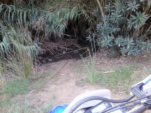 Trail extremo a Ojen Foto5535