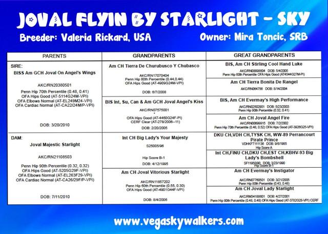 Pedigree_Joval_Flyin_by_Starlight_sky_er