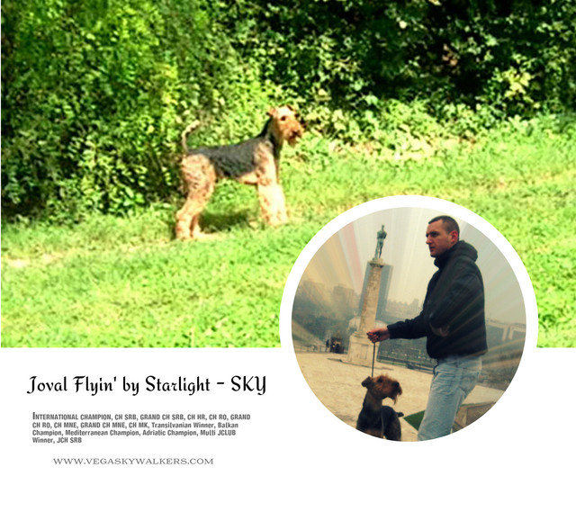 joval_flyin_by_stralight_sky_airedale_te