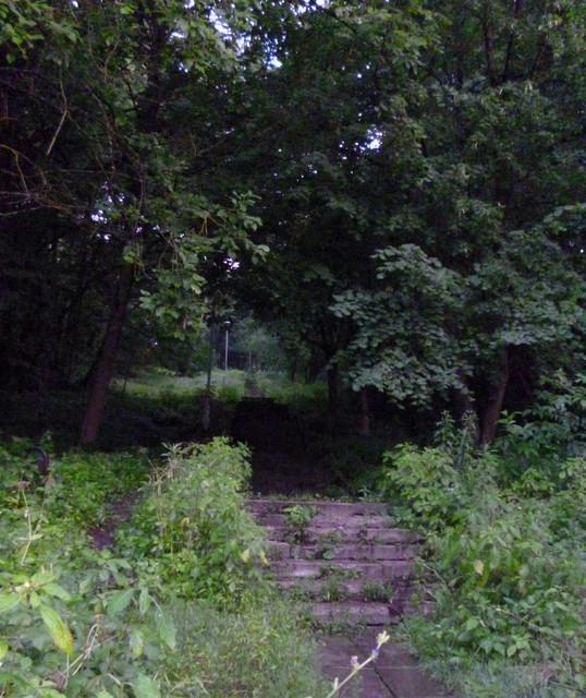 В поисках лесной герани