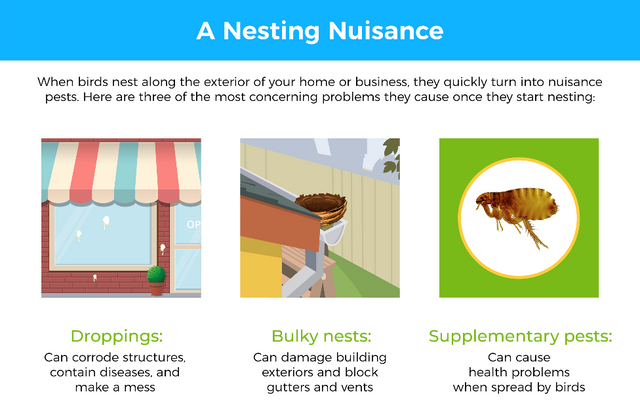 When birds nest along the exterior of your home or business, they quickly turn into nuisance pests. Here are three of the most concerning problems they cause once they start nesting: 1) Droppings: Can corrode structures, contain diseases, and make a mess 2) Bulky nests: Can damage building exteriors and block gutters and vents 3) Supplementary pests: Can cause health problems when spread by birds.